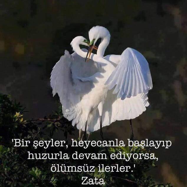 fb_ımg_1455510193722.jpg.jpg